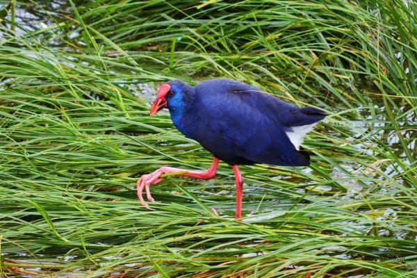 Birdwatching Algarve
