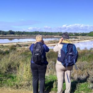 Birdwatching Ria Formosa marshes
