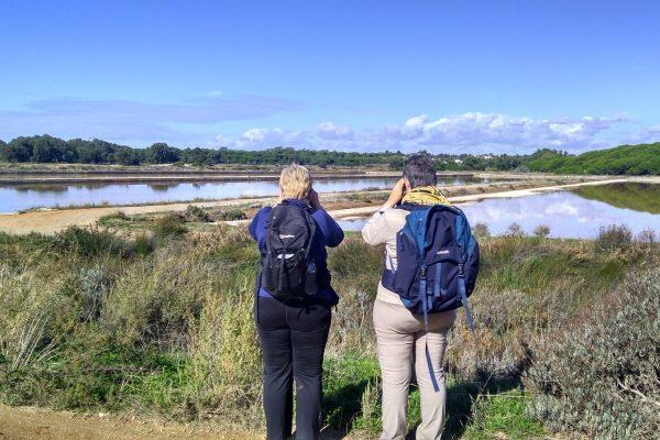 Birdwatching Ria Formosa marshes