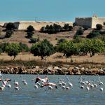 Castro Marim Nature Reserve