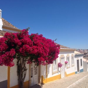 Colorful tipical houses in Tavira Algarve