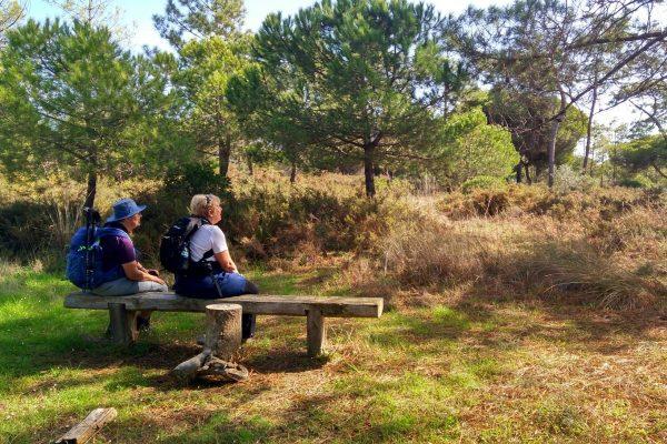 Ria Formosa Natural Park birdwatching