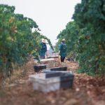 Wine estate in Portugal