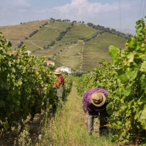 Douro Valley for the ports and wines