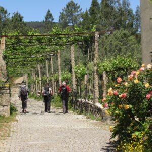 Vinho Verde walking tour